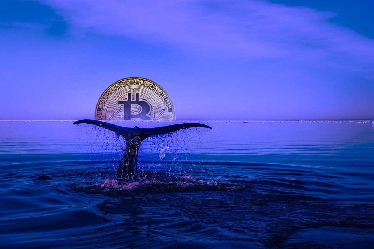 Resultado de imagen de ballenas bitcoin